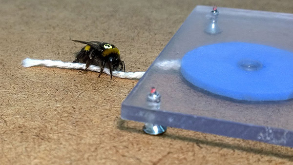 Smart-Insects_7