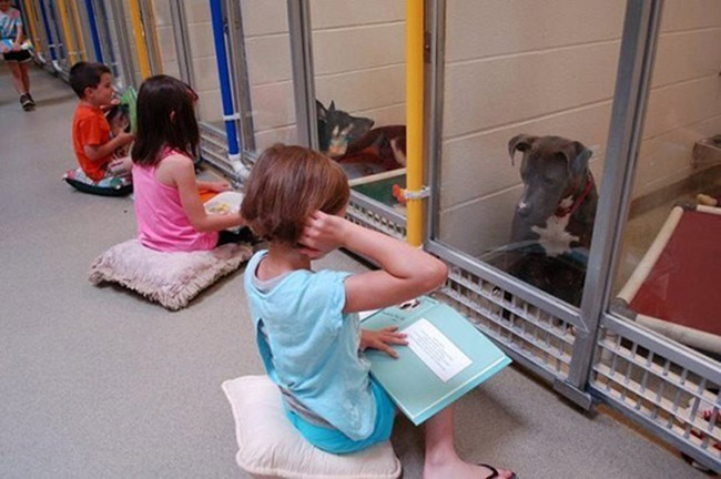 kids-animal-shelter_1
